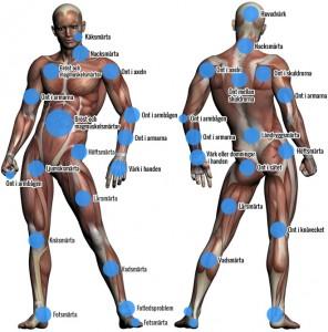 muskelbild
